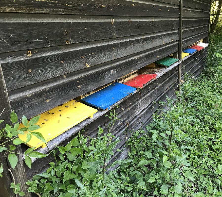 Bio-Honig Gut Hartschimmel